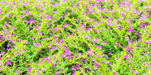 photodune-5842310-tiny-flowers--s