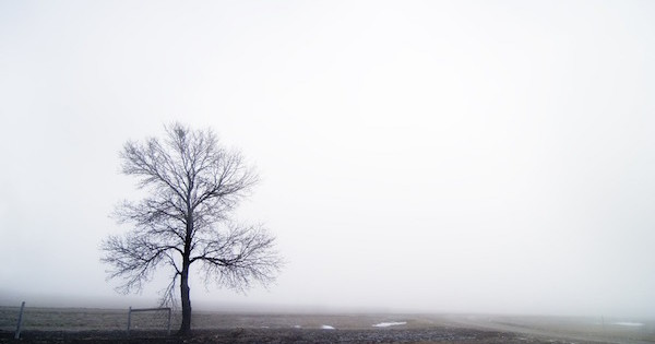 A single tree in the fog.
